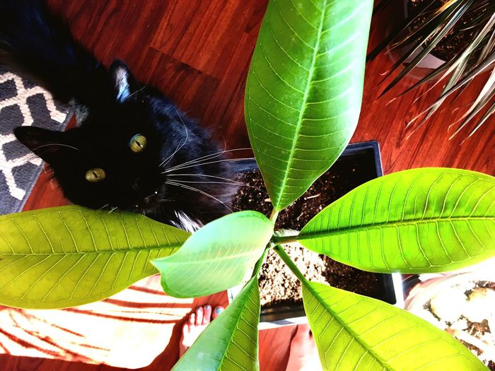 Cheeky Curious Sunlight Cats Cat Leaf Green Color One Animal Animal Themes Banana Leaf Day Nature Domestic Cat Tree Beauty In Nature Growth