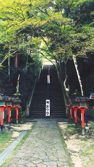 Travel Tanuki Japan Kyoto Buddhist Temple Staircase Tree Communication Architecture