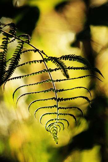 Silhouette Leaves Fern Fern, Nature, Leaf, Plant, Caterpillar, Green, Insect, Butterfly, Macro, Black, Forest, White, Natural, Abstract, Monarch, Tree, Isolated, Spring, Yellow, Larva, Close-up, Branch, Animal, Garden, Autumn