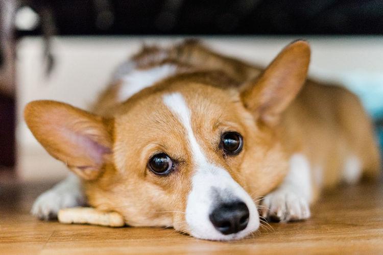 Close-up portrait of dog sitting