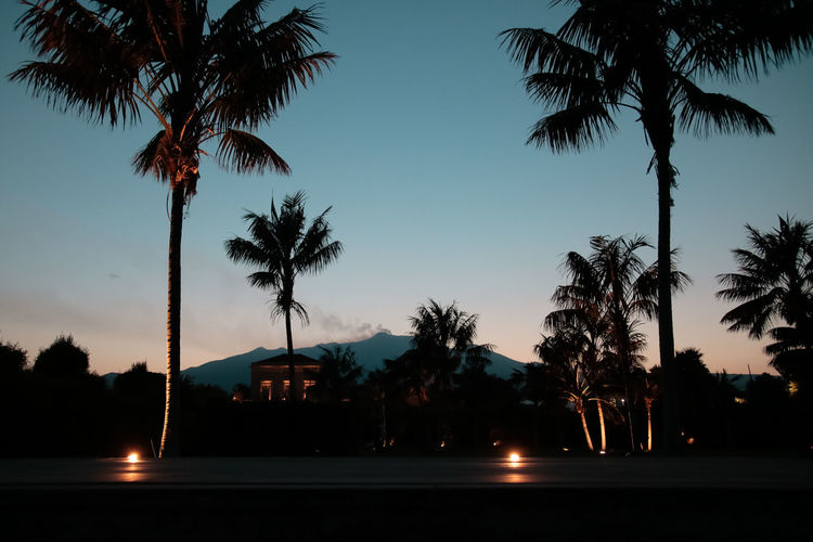 Silhouette palm trees against sky at night