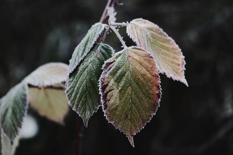 frozen world Frozen Frozen Nature Nature Photography Macro Photography Beauty In Nature Macro Beauty Focus On Foreground My Point Of View Reinheimer Teich Plant Part Winter Cold Temperature Close-up Leaf Vein Frost Leaves Ice Crystal Weather Condition Plant Life Icicle Leaf