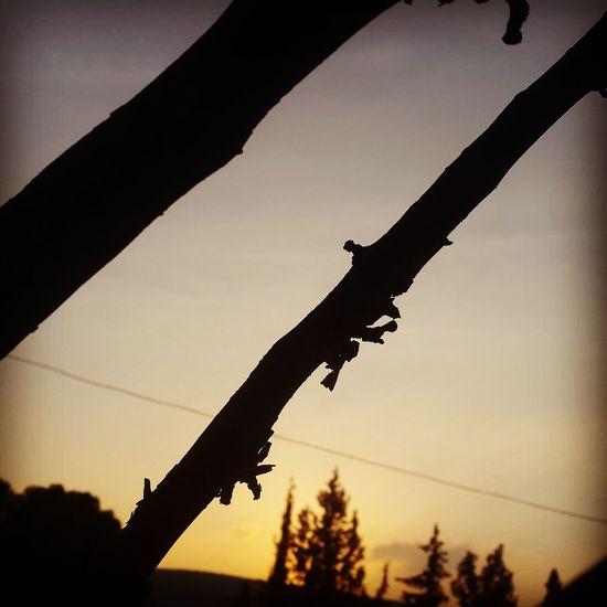 Sun Sunset Sun And Tree Sun And Trees Tree Beautiful Nature Nature Photography 🌸Nature🌸 Naturephotography ❤❤ Nature EyeEm Selects Beautiful ♥ Sky