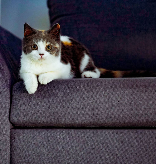 Portrait of cat relaxing on sofa at home
