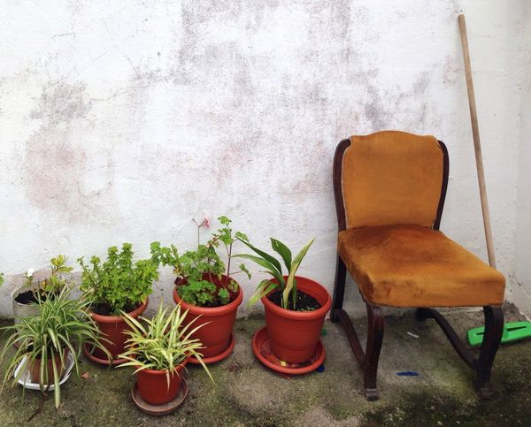 Silla Chair No People Plant Potted Plant Table Growth Indoors  Architecture Day Nature