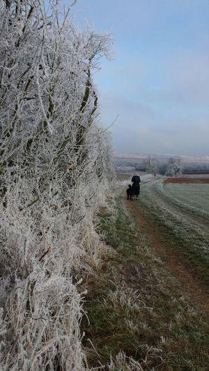 Winterlandschaft am Donnersberg in der Pfalz