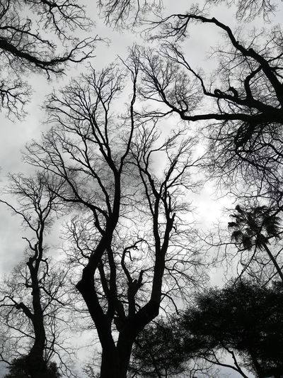Silhouette Silhouette Trees Silhouettes Collection Nature Photography Nature_collection Artistic Photography Treesillouete Greyskies Grey Skies Grey And White Branches Silhouette Branches Black/white Branch Against Sky Branches Against Grey Sky Tree Branch Backgrounds Silhouette Sky Twig