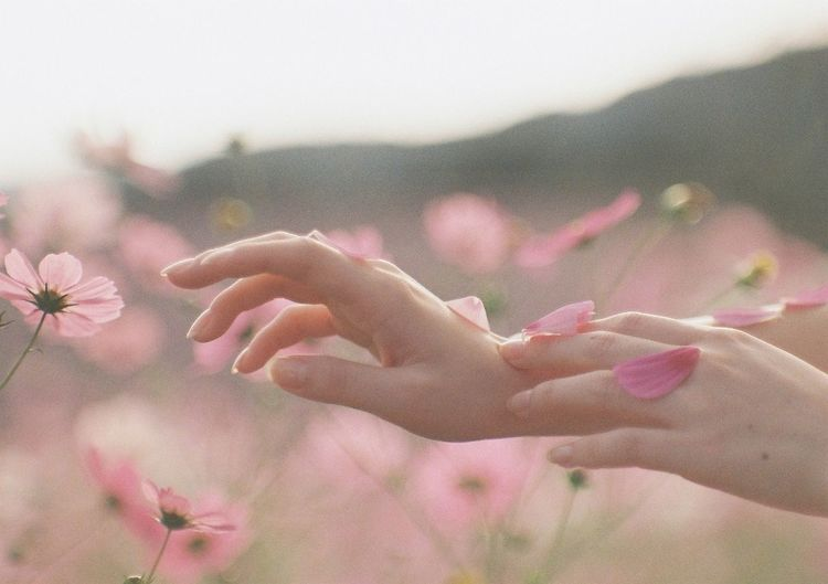 Close-up of hand on pink flowering plant