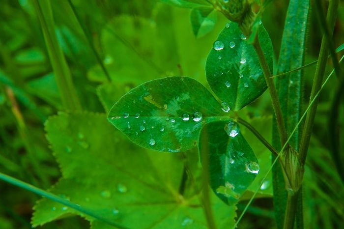 Somewhere in the middle of the franconian switzerland after a rain shower ... Beauty In Nature Close-up Drop Fragility Green Color Growth Nature No People Plant Purity RainDrop Water Wet