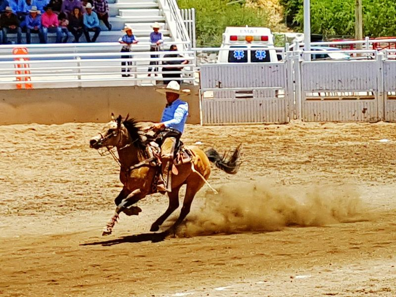 Riding Horse Competition Speed Outdoors Day Domestic Animals Adult One Person FNSM17 Hollydays Fiesta Mexicana Charreria