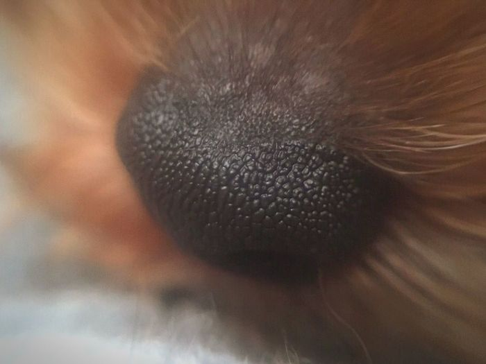 Close-up of a dog