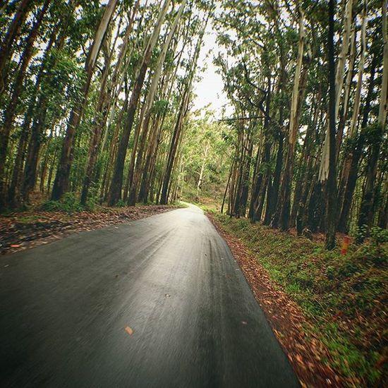 入山. Morning Tree Road Horton nanuoya nuwaraeliya srilanka