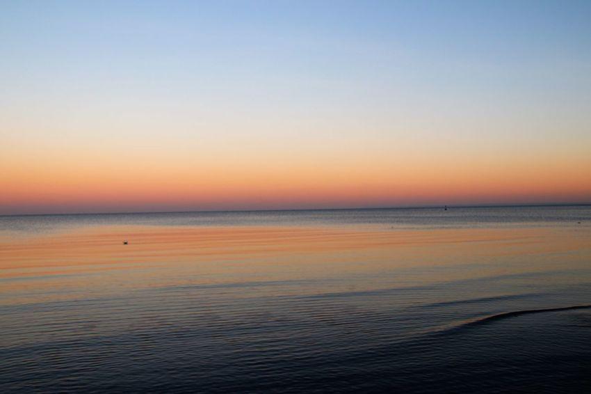 Scharbeutz Sonnenuntergang Schleswig-Holstein Vogel Möwe Nature Natur Strand Lübecker Bucht