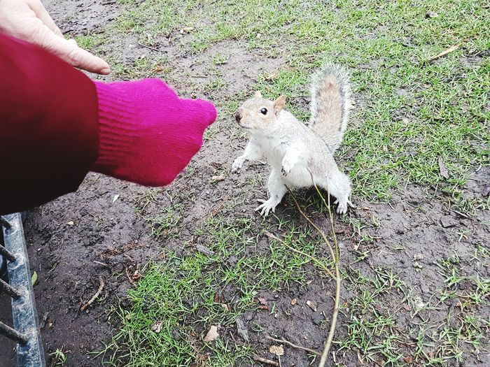 looking for food Animal Themes One Animal Pets Outdoors Human Body Part People Human Hand Mammal Squirrel St.James's Park London Park Garden Travel Green