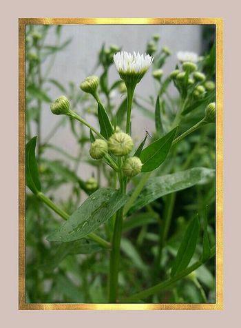 Photo Des Fleurs Nature