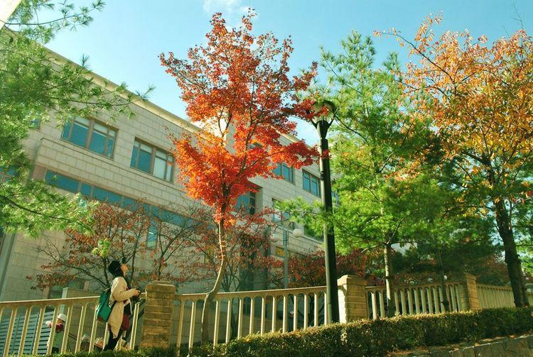 Fall Beauty Kookminuniversity Fall Colors November 2013 Seoul South Korea Capture The Moment