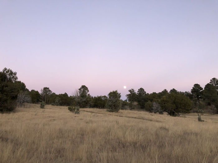 Purple Sky Dusk Full Moon Agricultural Field Countryside Country Road Trees Brown Twilight Copy Space Clear Sky Arid Climate Growth No People Outdoors Non-urban Scene Land Landscape Tree Field Remote Location Dramatic Sky Country Agricultural Land Fall Season