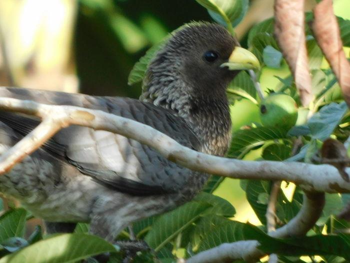 Perching Bird Beauty In Nature Bird Close Up Turaco Bird Turaco