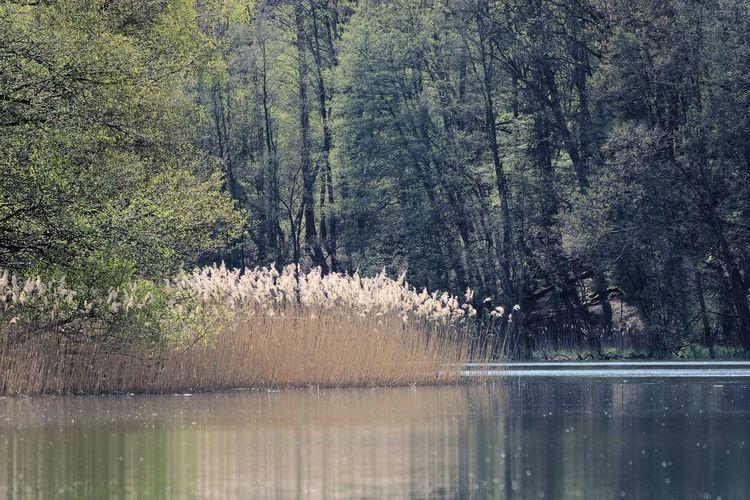 See in der Märkischen Schweiz Großer Klobichsee Märkische Schweiz Beauty In Nature Seascape Lake Outdoors Forest Lake Water Backgrounds Full Frame Reflection Close-up Sky