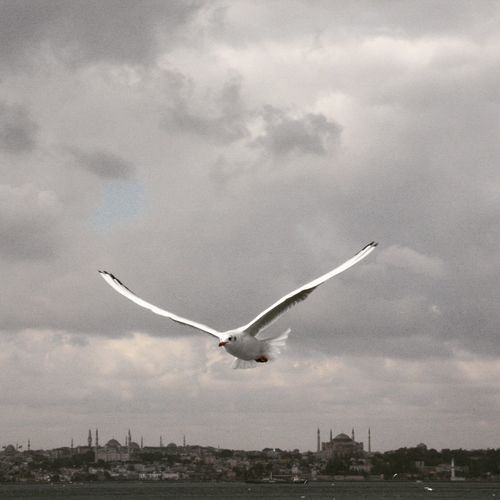 Boğaz'da fırtına bile başkadır ☁ Seagull In Focus Seagull In The Air Birdfotografy Seagull And Sky Stormy Weather Storm Cloud Seagulls Seagull Marti Bosphorus, Istanbul Bosphorus Eyemphotography Istanbullovers Turkiyem Eyemturkey Turkey Istanbulcity Enjoying Life Relaxing Hello World Taking Photos