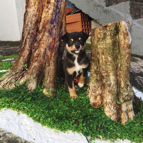 Mammal Vertebrate One Animal Pets Domestic Dog Canine Day Domestic Animals No People Looking At Camera Plant Portrait Nature Sunlight Outdoors Grass