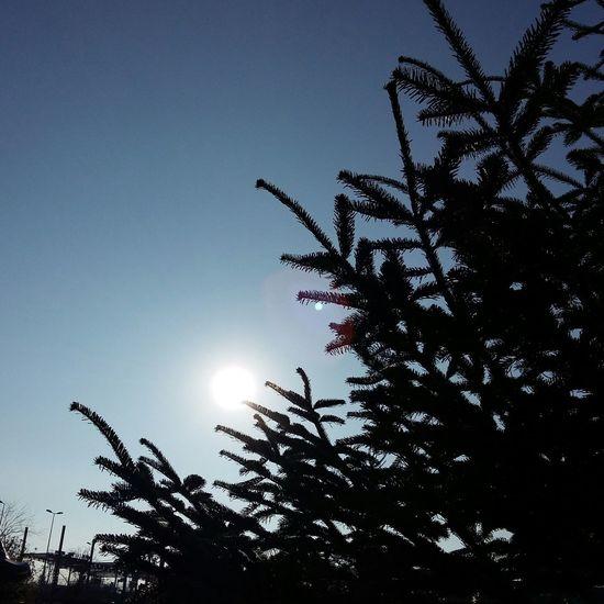 Outdoors Tree