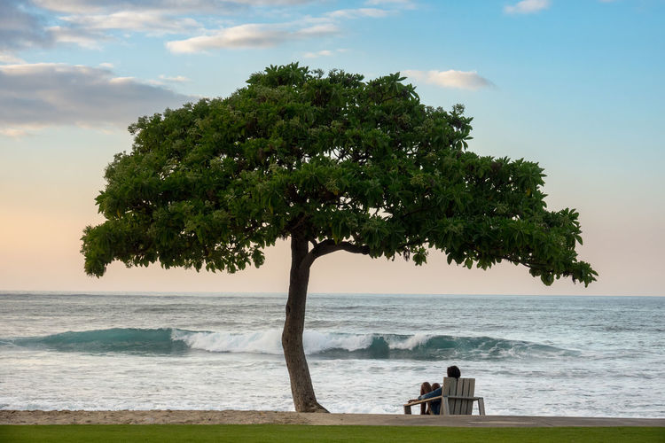 Rear View Of Man Sitting By Tree At Beach Against Sky