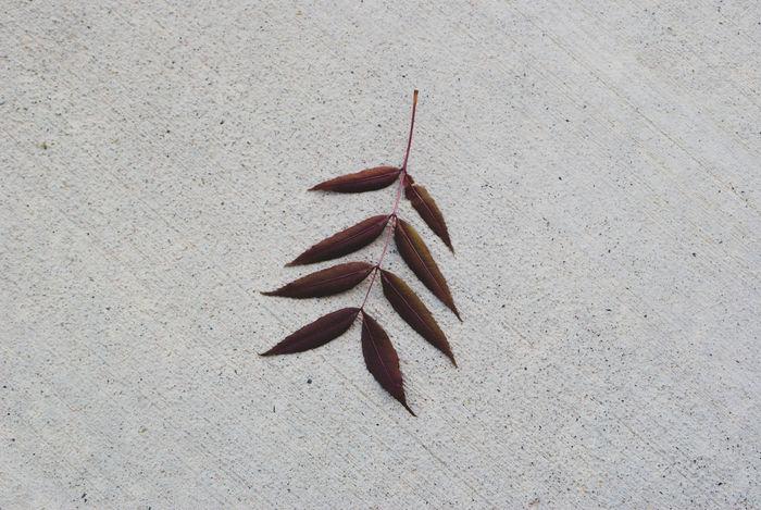 Leaf 🍂 Photographerinlasvegas Evanscsmith