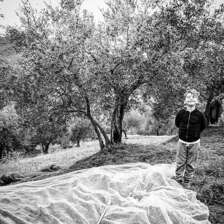 We helped our neighbours pick their olives as they in turn had helped with picking ours. Ponte alla Piera, Tuscany, Italy. Outdoors Tree Real People Nature Sky Cloud - Sky Blackandwhitechallenge Blackandwhitephotography Nature Italygram Tuscany Italy Tree Anghiari Travel Landscape Visitarezzo Toscana Arezzo Beauty In Nature Ig_TUSCANY_ Tuscanypeople Boy Olive Tree Olive Picking