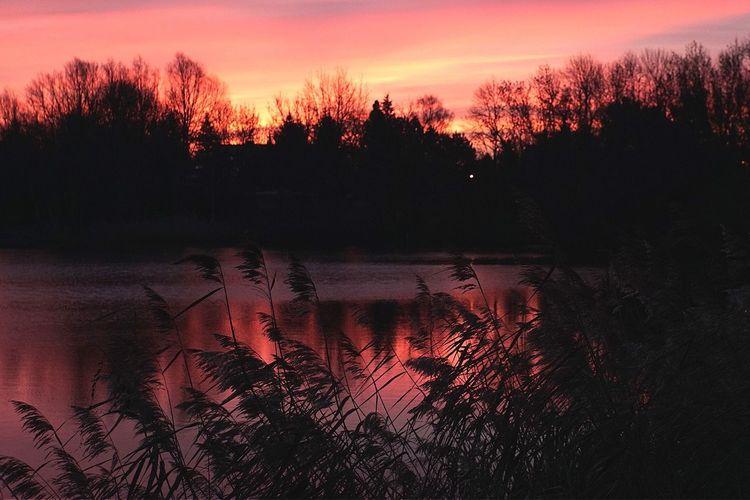 Landscape Landscape_Collection Sunrise Good Morning Red Sky Open Edit Eye4photography  AMPt_community Tadaa Community EyeEm Masterclass EyeEm Best Shots Landscapes With WhiteWall