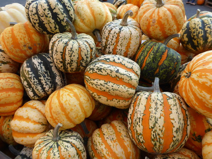 Erntedankfest Kürbisausstellung Kürbisse Patterns In Nature Thanksgiving Backgrounds Backgrounds Details Textures And Shapes Close-up Colours & Shapes In Nature Food Food And Drink Freshness Full Frame Gourd Halloween Healthy Eating Market No People Pumpkin Vegetable