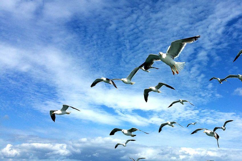 Albatros Ocean Sea And Sky Birds Bird Watching Bird Watch Free Peche Gulls In Flight Gulls And Sea Gull No People Mer La Mer Du Nord Belgique