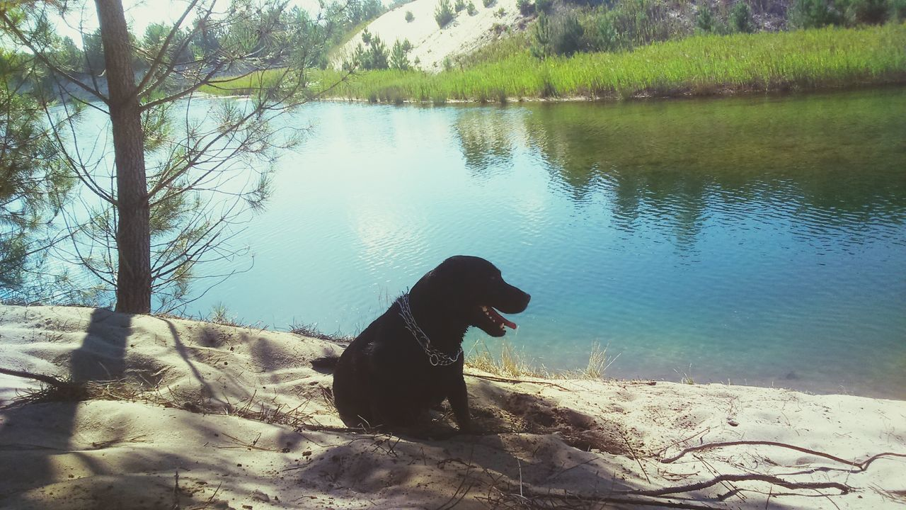 water, nature, day, one animal, dog, pets, outdoors, animal themes, domestic animals, no people, mammal, tree, beauty in nature