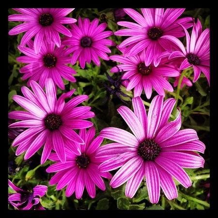 Flower  çicek Dayofthephoto Bestphoto