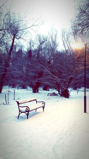 Wintertime Winterland Winter Snowtime Snowypath Showcase: January Showcase Snowinthepark Beautifulsnow