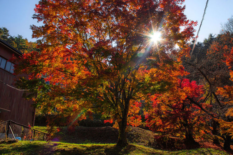 Autumn EyeEmNewHere Japan Nature Travel Autumn Beauty In Nature Change Day Fall Full Frame Growth Nature No People Orange Color Outdoors Plant Sunlight Travel Destinations Tree