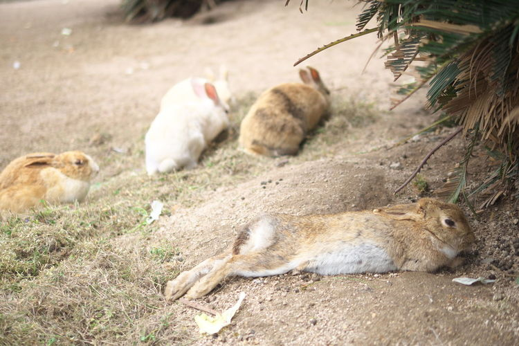 Rabbits relaxing on ground