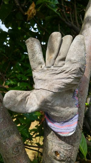 Workglove The Giant's Glove Gardening Garden In London