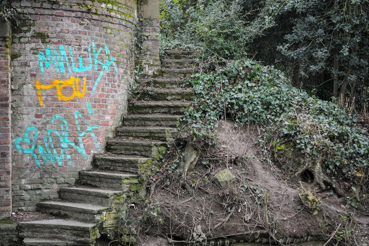 Brick Wall Castle Elevation Fairytale  Graffiti Green Ruins Stairs Tradition Abandoned Colorful Disappearing Discovery Fading Away History Middle Ages Need Protection Need To Clean No End No People Old Buildings Vandalism Vandalized Wild Vegetation