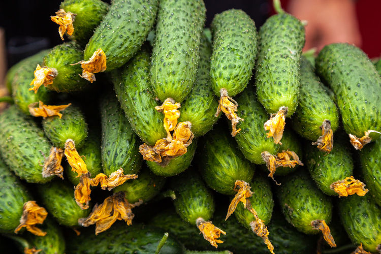 Green cucumber.