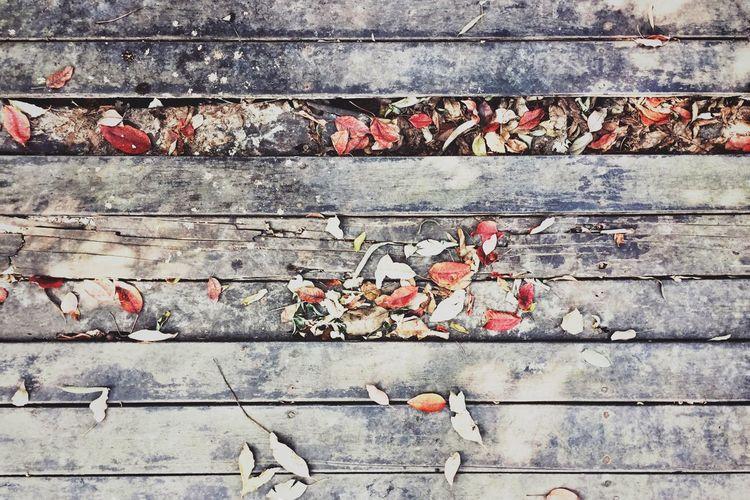 残缺的枯叶 腐朽的木头 荒废的时光. 那些没有被阳光照射的角落 First Eyeem Photo