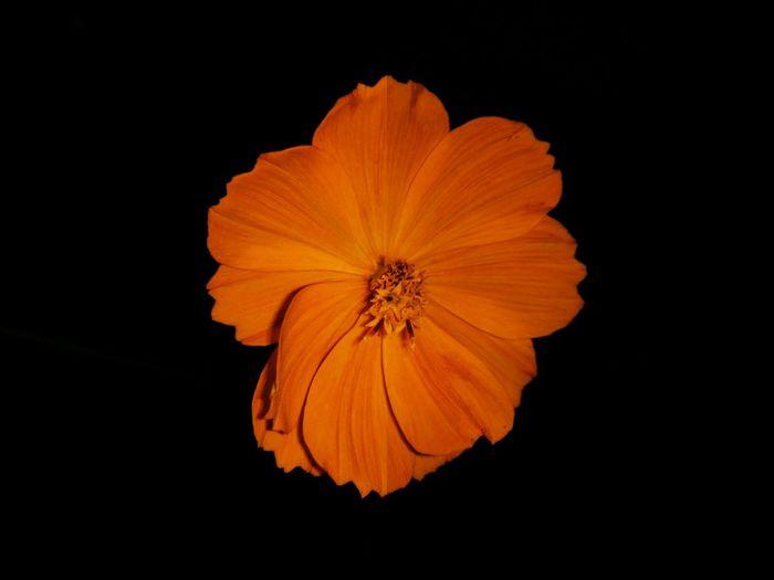 Minimal Oneplusone Flower Orange Is The New Black