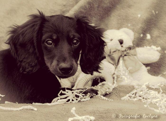 Dog Puppy PuppyShots
