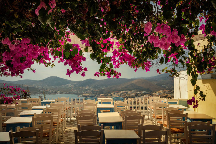 Pink flowers against empty tables and chairs at outdoor restaurant