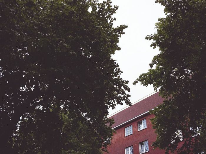 House between the Trees. · Hamburg Germany 040 Barmbek Residential Building Brick Building Residential Neighborhood Trees And Sky Hugging A Tree Up Simplicity Everyday Beauty