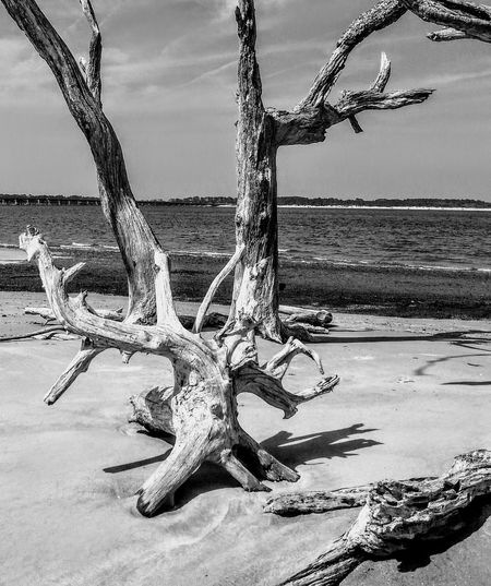 Outside Photography Drift Wood On Beach peaceful bw gray sand water hiding spot clarity alone Perspectives On Nature