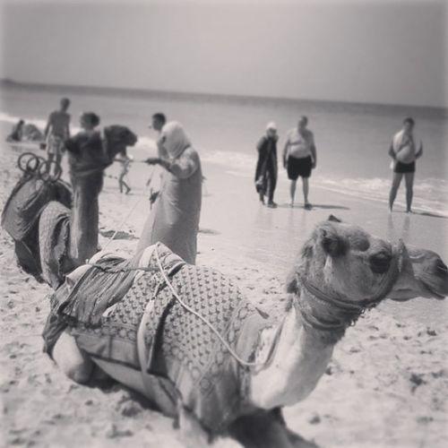 I want one!!! Dubai Dubaitaxi Instafun