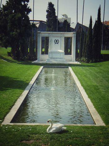 Hollywood Hollywood Forever Cemetery Fairbanks Old Hollywood EyeEm Best Shots EyeEm Gallery Los Angeles, California Swan Depth The Moment - 2015 EyeEm Awards