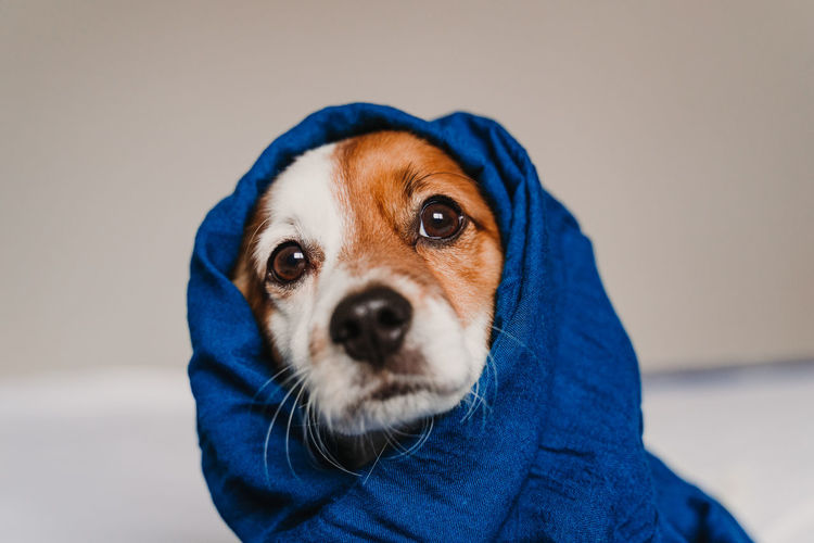 Close-up portrait of dog wearing headscarf