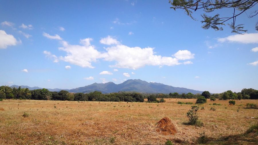 Tree Mountain Agriculture Sky Mountain Range Cloud - Sky Farmland Agricultural Field Farm Plantation